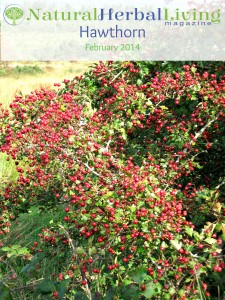 Hawthorn cover