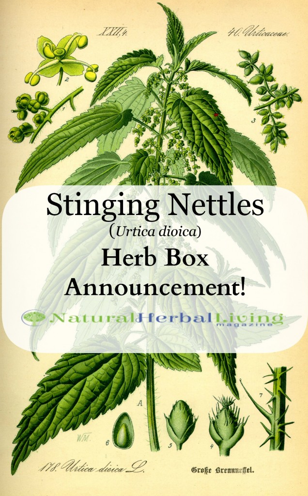 Nettle Magazine and Herb Box Announcement! March 2014