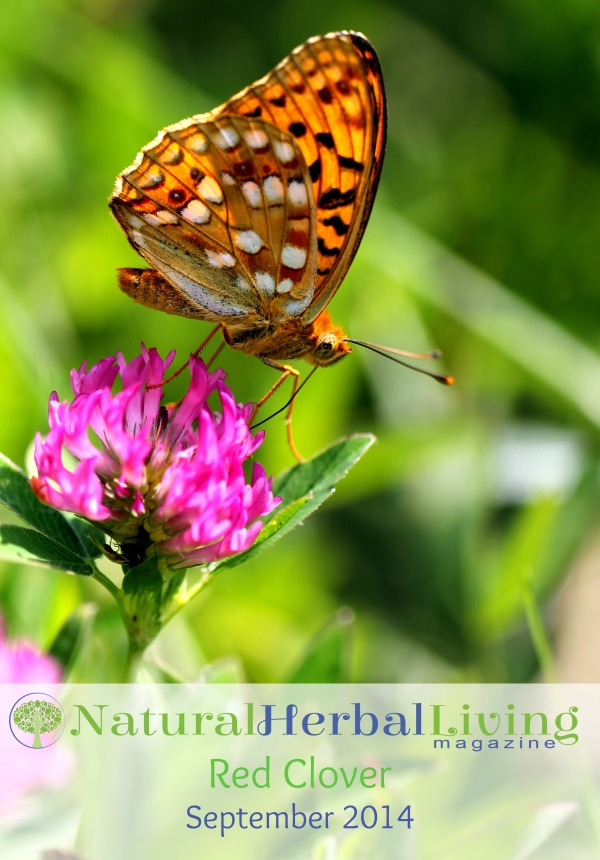 Red Clover Small