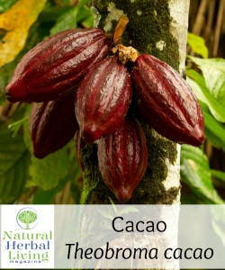 cacao cover photo small