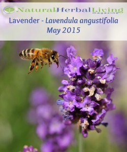 lavender color photo