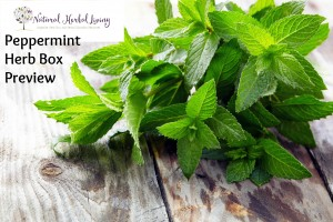 Peppermint Herb Box Announcement