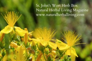 St. John's Wort Herb Box Announcement