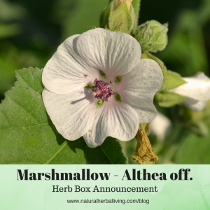 Marshmallow Herb Box Announcement