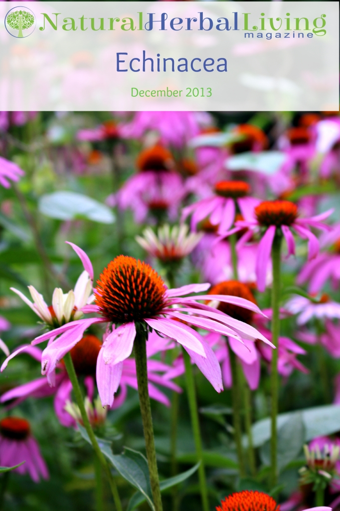 Echinacea cover photo